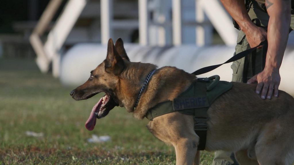 BSO K-9 Unit Training Exercise | Sheriff's Foundation of
